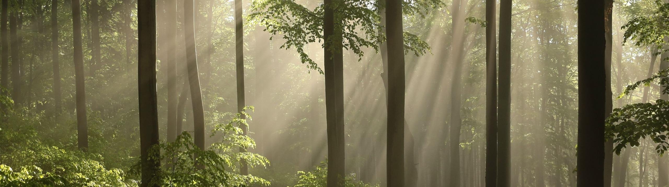 Brennholz aus feinster Buche - Buchenwald