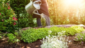 Alles für den Garten - Gartenpflege