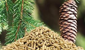 Pellets aus Fichtenholz