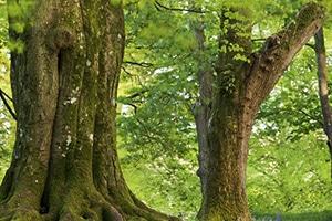 Premium Stammholz - Buchenholz und Eichenholz