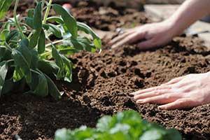 Blumenerde für Garten, Balkon und Terrasse